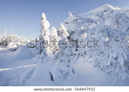 Snow covered fir trees and rocks. Winter landscape. Mountain range Zuratkul #564647932