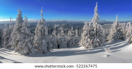 Snow covered fir trees on the background of mountain peaks. Panoramic view of the picturesque snowy winter landscape. Magnificent and silent sunny day.  #522267475