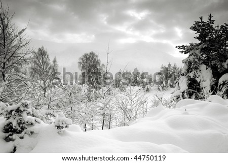 Snow covered forest in the Rothiemurchus area of the Scottish Highlands