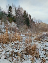 snow covered forest slope with dry yellow grass and reeds against a blue sky with clouds