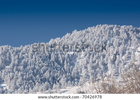 Snow-Covered Forested Mountain with Vivid Blue Sky