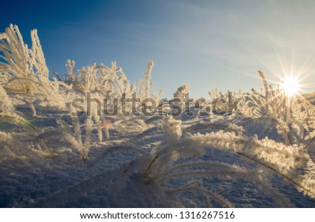 snow covered hill covered in grass #1316267516