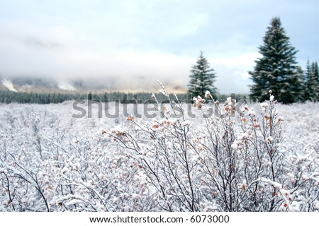 Snow covered landscapes in winter just in time for Christmas and holiday season