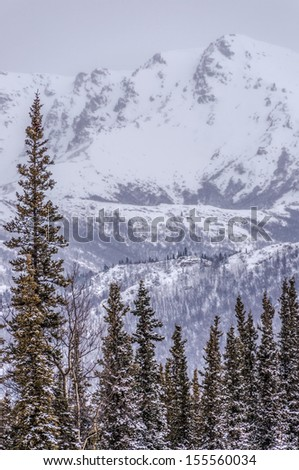 Snow covered mountain, fresh spring snow on spruce forest, Denali National Park, Alaska
