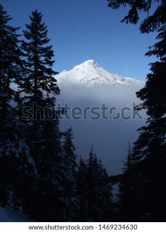 Snow covered Mt. Hood in Oregon seen through some fir trees. A fog bank hangs below the mountain. #1469234630
