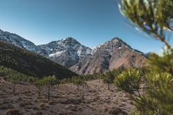 Snow covered peaks of Toubkal National Park Morocco, High Atlas Mountains. Sunrise light with blue sky. Small forect in the foreground.