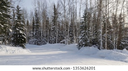Snow Covered Road and Tall Evergreens Straddling Each Side; Daytime, Winter Scene, Travel #1353626201