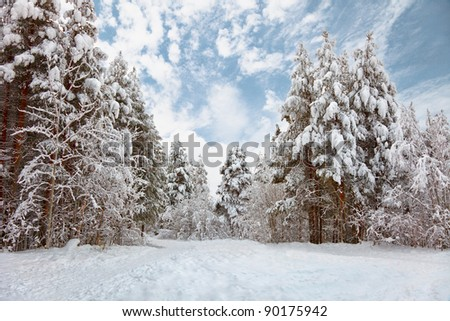 Snow-covered road in the northern winter forest - landscape