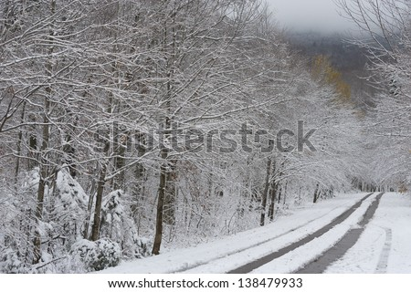 Snow covered road underneath a canopy of snow covered trees leading to Smugglers Notck, Stowe, Vermont, USA