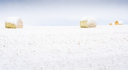 Snow covered round hay bales on the Canadian prairies in Rocky View County Alberta.