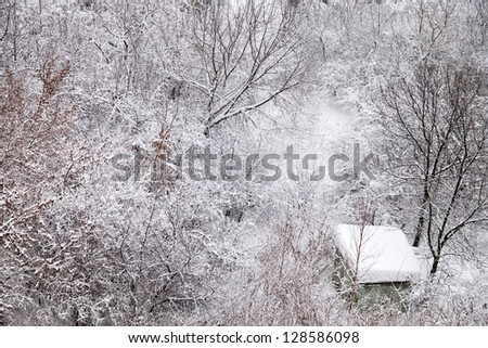 snow-covered shed in winter forest