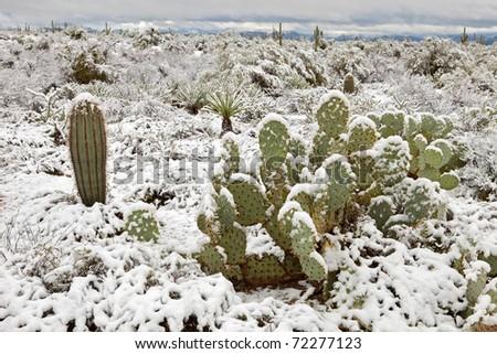 Snow covered Sonoran Desert.