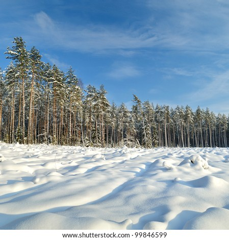 Snow covered sunny winter landscape panorama #99846599