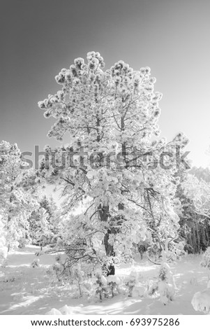 Snow Covered Tree #693975286