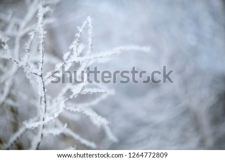 Snow-covered tree braches. Natural winter background. #1264772809