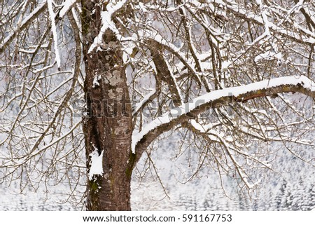 Snow covered tree branches #591167753