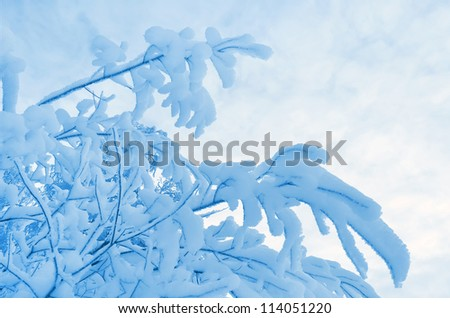Snow-covered tree branches against the sky
