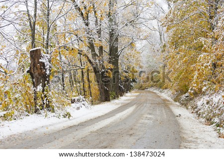 Snow covered tree canopy over a dirt road during fall foliage season, Stowe, Vermont, USA
