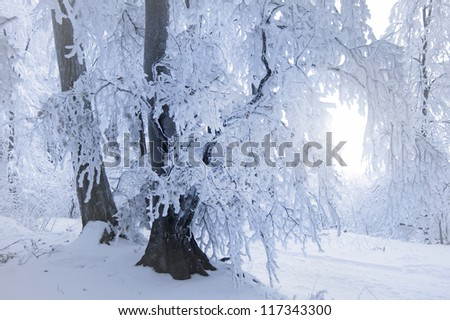 snow covered tree in a frozen forest in winter