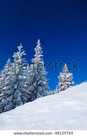 Snow-covered trees against the blue sky. Winter. The picture was taken in the Ukrainian Carpathians.