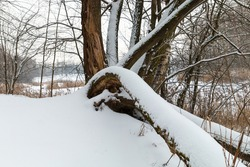 snow-covered trees and branches in a winter dream