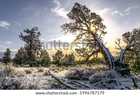 Snow covered trees at dawn. Winter snow nature at dawn. Sun rise at dawn. Snowy nature sunrise