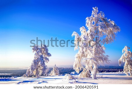 Snow covered trees in a winter landscape. Winter snowy trees. Winter snow nature landscape. Winter snow scene