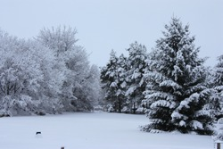 Snow covered trees in backyard