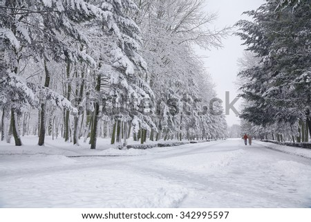 Snow-covered trees in the city park. Couple on a walk #342995597