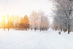 Snow-covered trees in the city park. Lots of snow at sunset