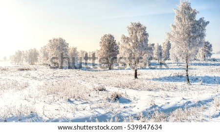 Snow covered trees in winter snowy landscape #539847634