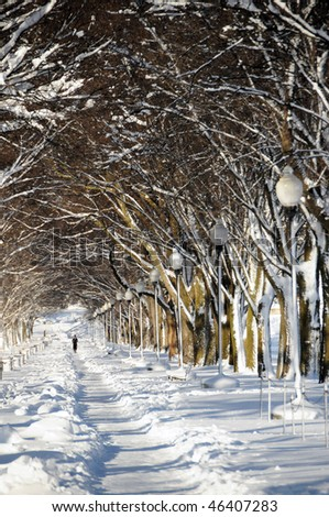 Snow covered trees lining a running path in Washington, DC after February 2010 storms. Vertical Photo.