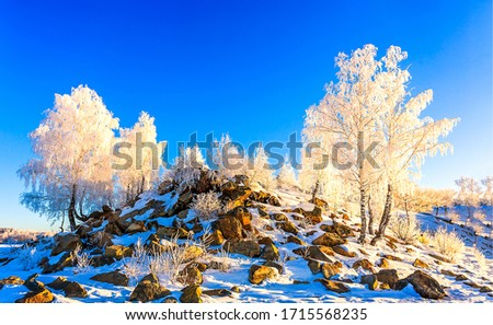 Snow covered trees on hill. Mountain hill snow covered trees in winter
