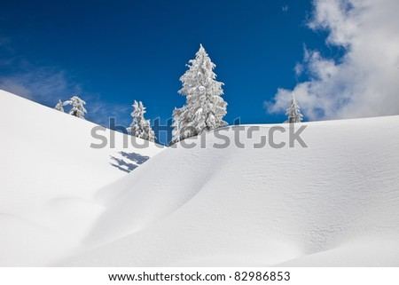 Snow-covered Trees on Snow Mountain