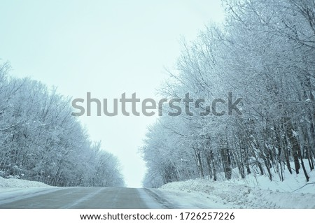 snow covered trees, snow covered road, snow covered road in the forest