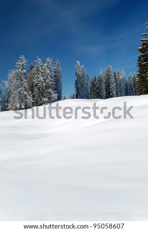 snow-covered winter landscape with fir trees