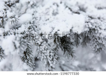 Snow-cowered fir branches. Winter blur background. Frost tree #1198777330