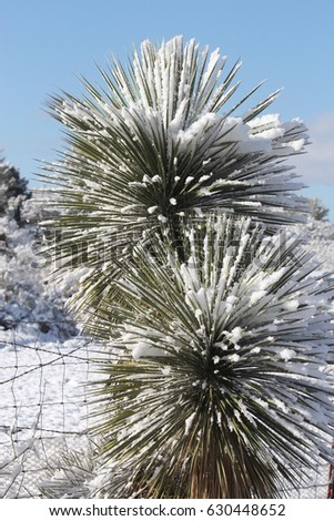 snow day in tucson arizona