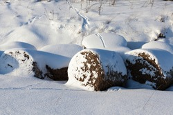 snow drifts in the winterseason, pieces of grass and tree branches sticking out through the snow, natural phenomena associated with the winter season, frosty post-snow weather