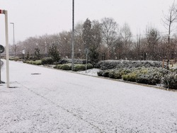 Snow falling on a road and roadside bushes and shrubbery in Sheffield, England, United Kingdom