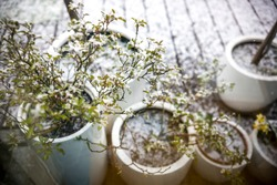 Snow falling on spring flowers and plants on a balcony or terrace.