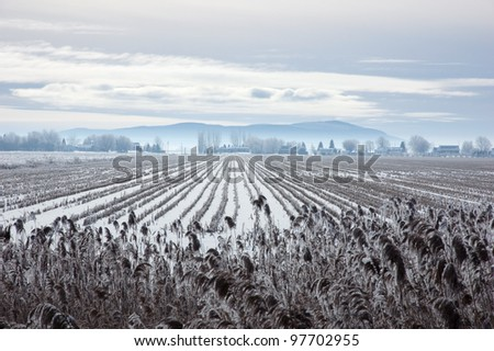 Snow field with dry grass blades on hill background