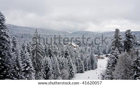 Snow fir and pine trees in the Rila mountain. Ski resort Borovets, Bulgaria