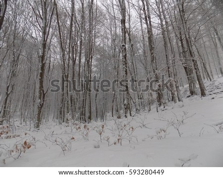 Snow in nature during winter #593280449