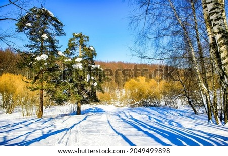 Snow in the autumn forest. WInter snow nature scene. Winter in snowy forest