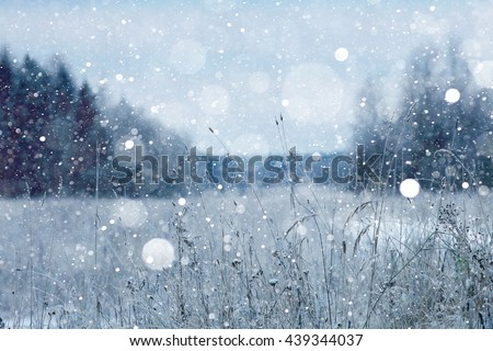snow in the forest landscape