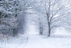 snow landscape with country road in the woods
