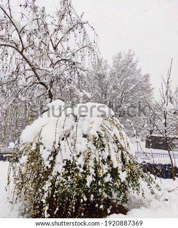 snow landscapes. trees under the snow. a white nature. snow background. white. green. sky. tree. Stok fotoğraf ©