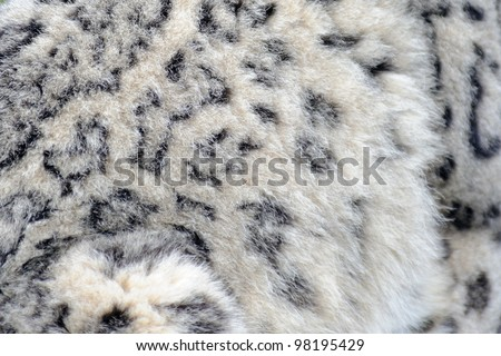 Stock Photo Snow leopard close up abstract fur