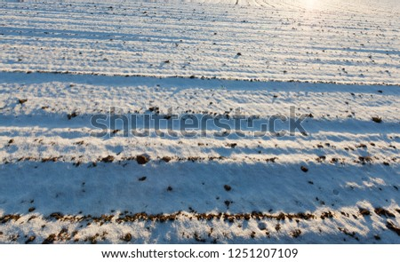 snow lying in snowdrifts after the last snowfall. Picture in winter with little depth of field. Through the snow you can see the land from the plowed agricultural field